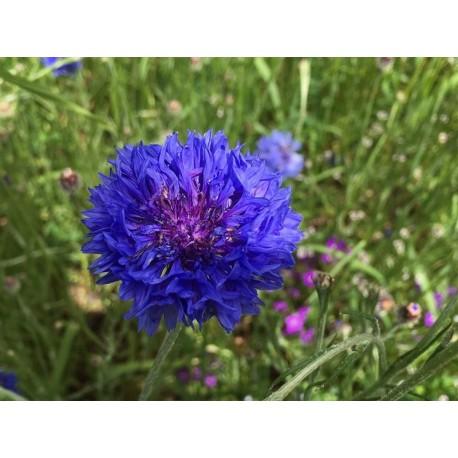 hydrolat bleuet production locale- Essenciagua