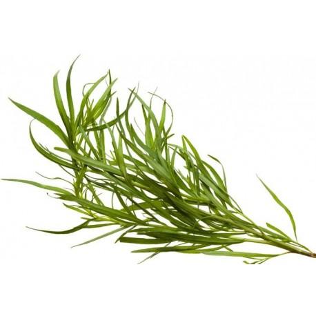 huile essentielle estragon botaniquement  définie - Essenciagua