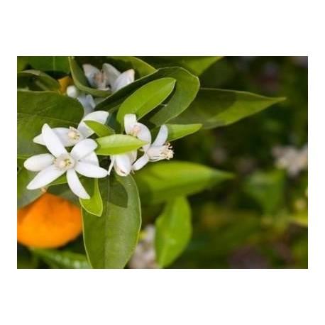 hydrolat fleur oranger recette cuisine - Essenciagua